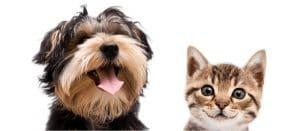 Furry Friends Forever - Polkadot Communications - Blog