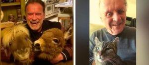 The rise of the pet furnomenon